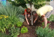 Worst Trees To Plant In Your Yard