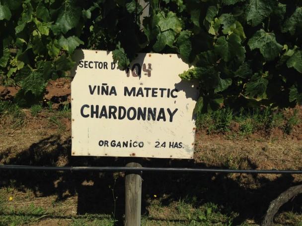 Wine Production: Going Organic