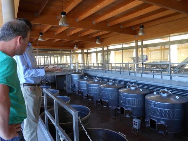 Wine Production: Going Organic
