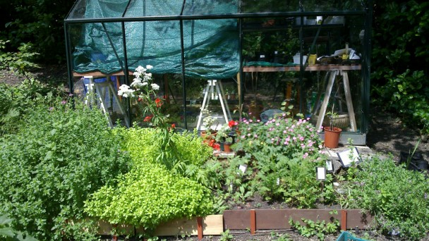 Organic Solutions For A Pest-free Garden